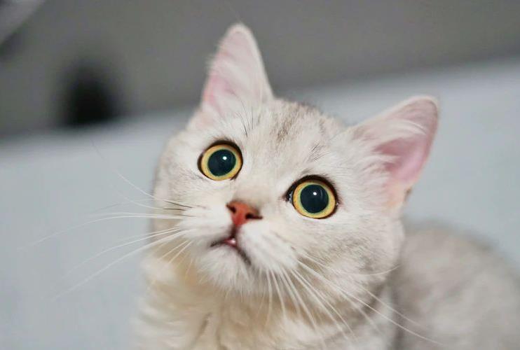 猫咪吃了老鼠药怎么办