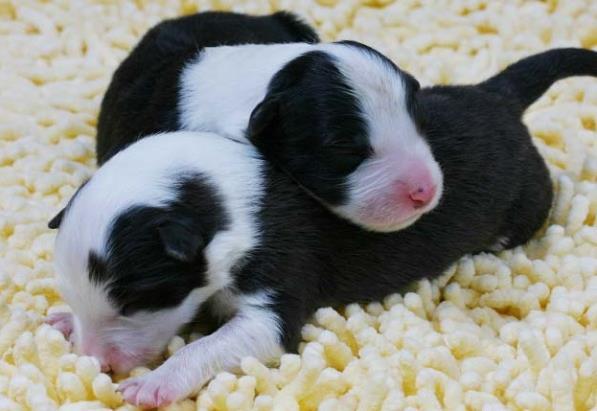 刚出生的小狗吃什么