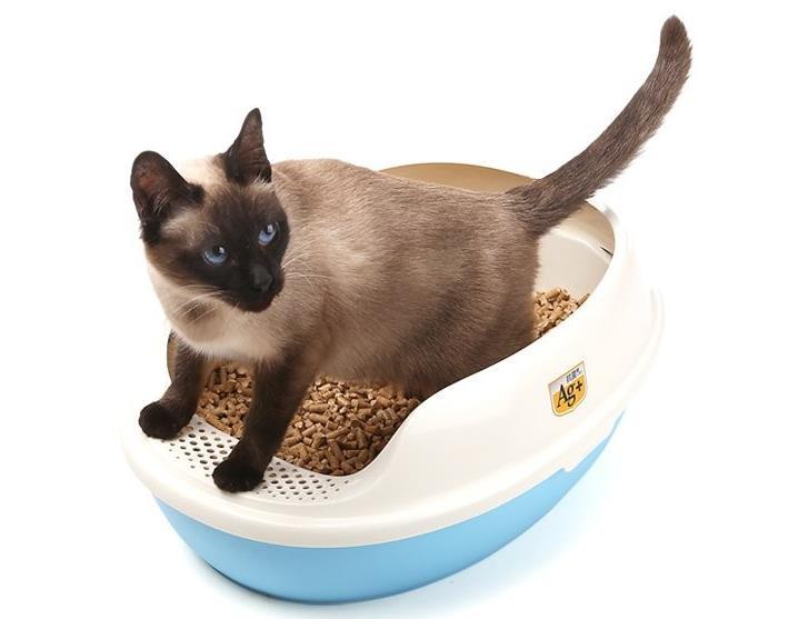 猫咪换新猫砂会有什么反应吗