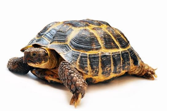 乌龟多久换水一次