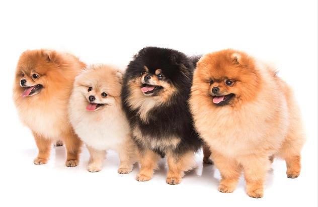 幼犬生长发育在哪几个月