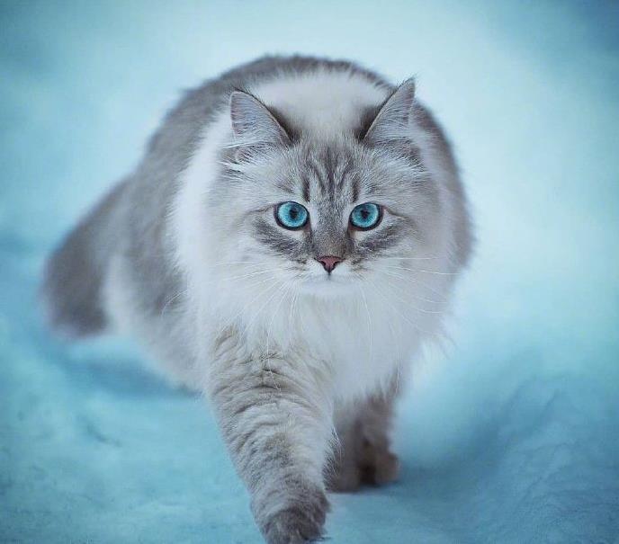 猫咪会有高血压吗