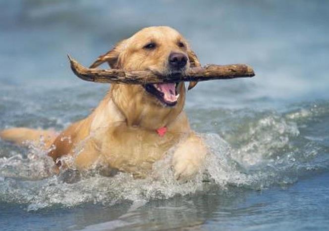 海水对狗狗的皮肤有伤害吗