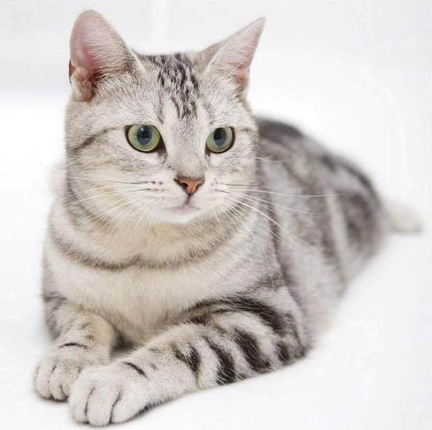 猫咪有哪些遗传病