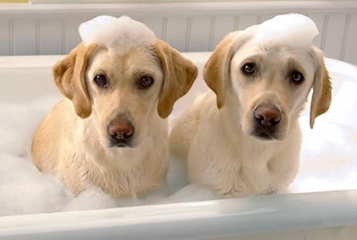 给狗洗澡能用冷水吗