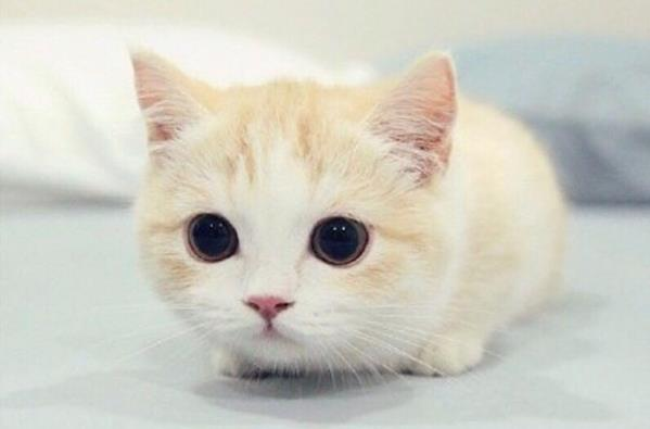 猫咪乱尿怎么办