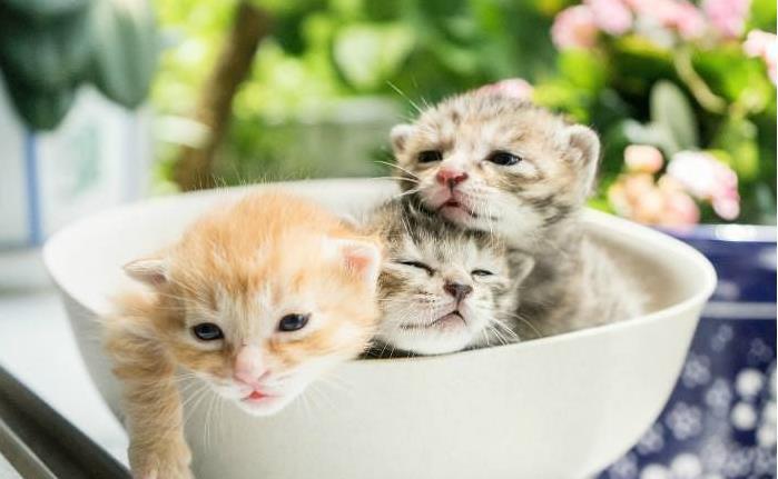 哪些猫咪好养哪些不好养