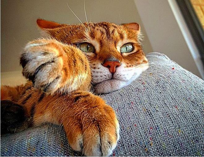 猫咪的寿命多少年