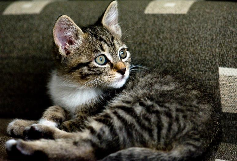 猫咪为什么发出咕噜声