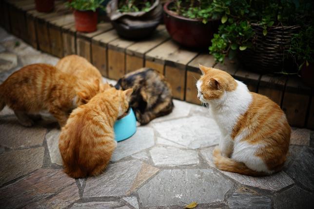 给猫咪换新粮过度方法